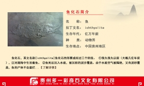 鱼化石简介