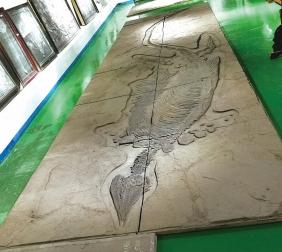 贵州鱼龙化石