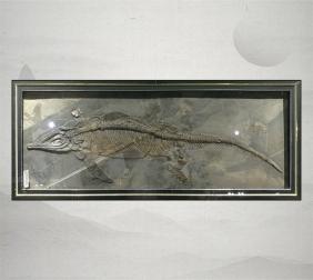 鱼龙化石保存