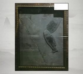 双鱼化石展示