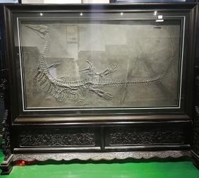 贵州幻龙化石