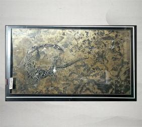 幻龙化石收藏