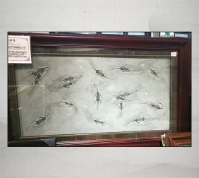 贵州龙化石