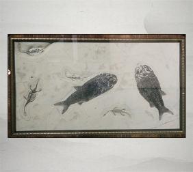 贵州龙、真颚鱼