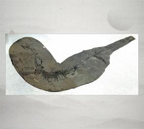 贵州古生物化石