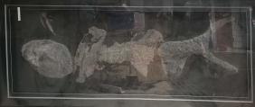 六盘水鱼化石