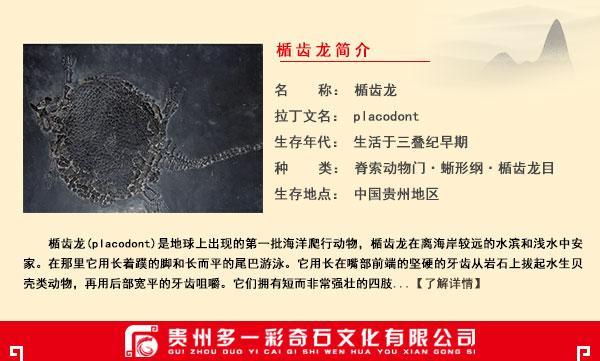 楯齿龙化石